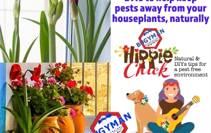 Hippie Chick Houseplant pests