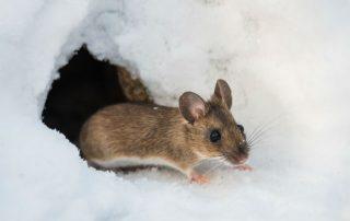 Bugyman Hippy Chick mouse